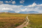 pic of bolivar  - Track to Mount Roraima  - JPG