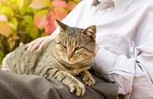 pic of lap  - Tabby cat enjoying cuddling in old man - JPG