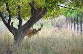 stock photo of tall grass  - Deer buck peeking out from hiding place behind an apple tree in tall grass - JPG