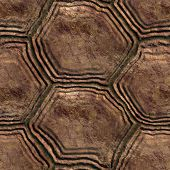 picture of turtle shell  - A turtle shell seamless texture - JPG