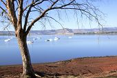 foto of natal  - Leafless Branches Overhanging Yachts anchored on Midmar Dam in the Midlands of Kwa - JPG