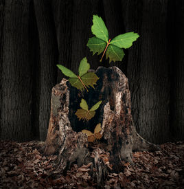 picture of life after death  - Afterlife and rebirth concept as a group of leaves shaped as flying butterflies rising out of a dead decaying tree stump as a symbol of a soul leaving the body the a birth of new life after death with hope for the future - JPG