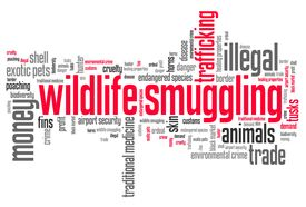 stock photo of smuggling  - Wildlife smuggling  - JPG