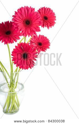 Bouquet of Dark Pink Gerbera Daisy in a Clear Vase