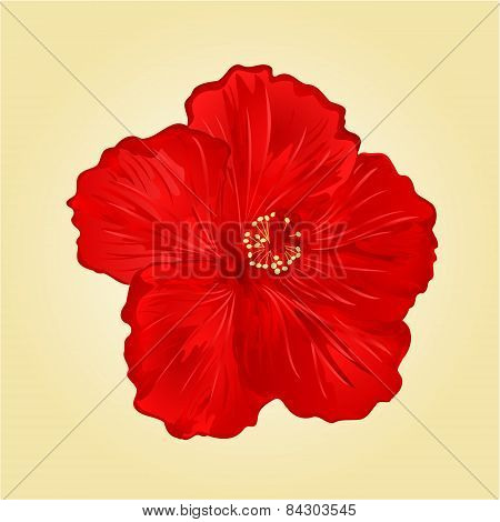 Red Hibiscus Flower Vector