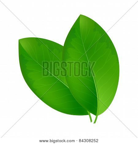 Eco background with fresh green leaves.