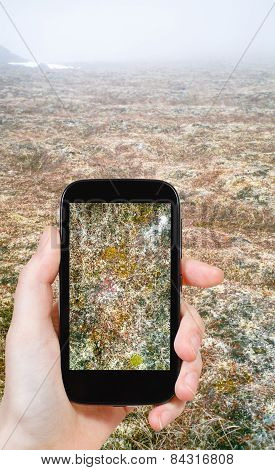 Tourist Taking Photo Of Moss In Arctic Tundra