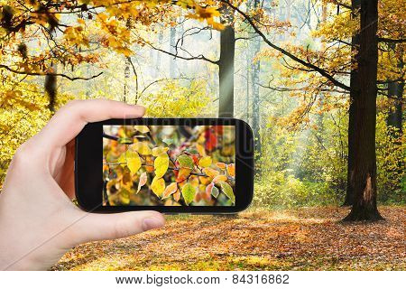 Tourist Taking Photo Of Autumn Forest