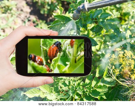 Man Taking Photo Of Processing Pesticide In Garden