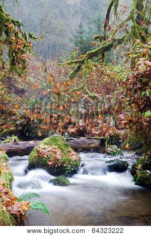 Fall Autumn Forest Stream Bubbling Brook Mossy River