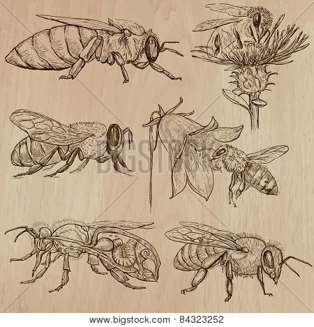 Bees, Beekeeping And Honey - Hand Drawn Vector Pack 3