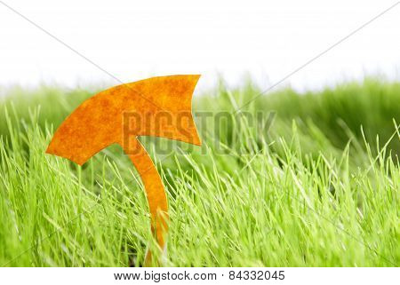 Empty Label On Green Grass Copy Space