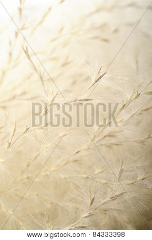Dry Grass Flower