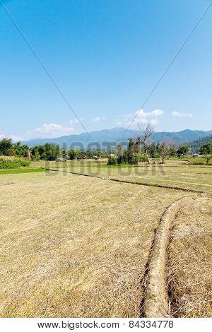 Paddy-field ridge