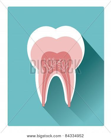 Modern flat tooth detailed anatomy icon with long shadow effect