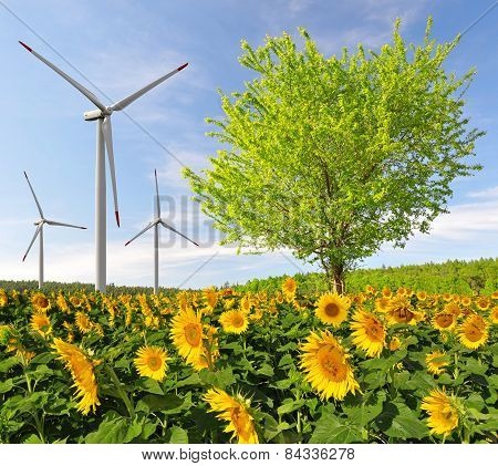 Sunflower field with tree and wind turbines.
