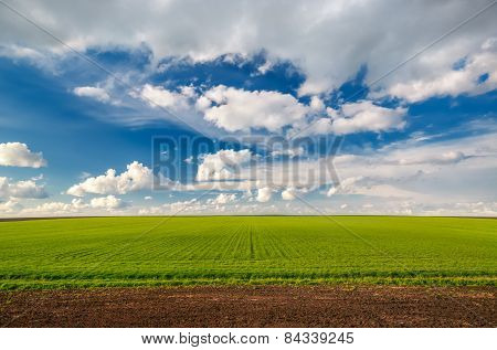 Wheat Field Against Blue Sky With White Clouds