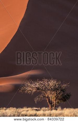 Trees lost in time in Deadvlei in Sossusvlei, Namibia.