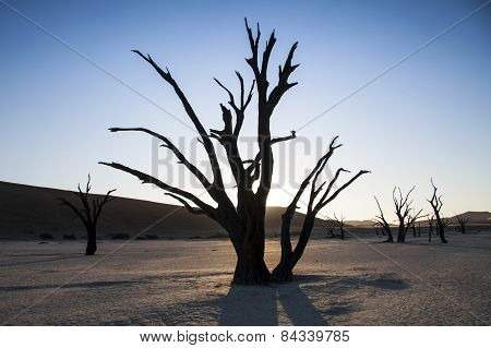 Trees lost in time in Deadvlei in Sossusvlei, Namibia.