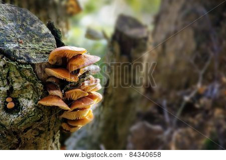 Fungus At An Old Tree Trunk