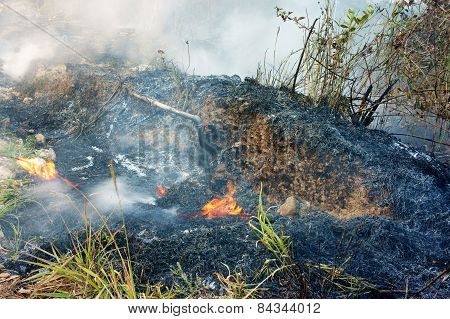 Burn Dry Grass, Forest Fire