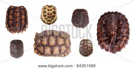 Different Tortoiseshells On White