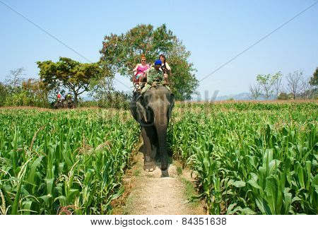 Tourist Traveling Vietnamese Countryside, Ride Elephant