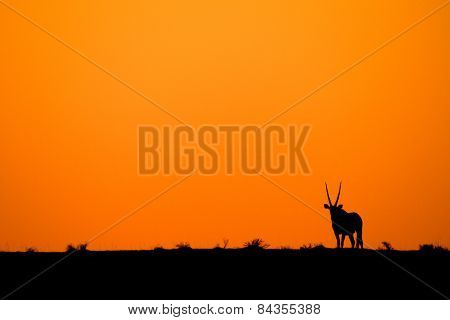 Gemsbok sunset