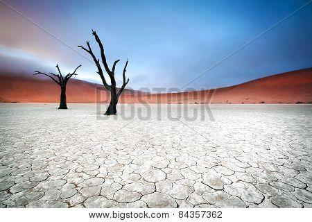 Two hands of Deadvlei.
