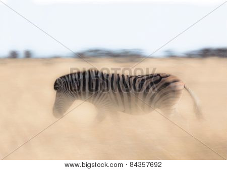 Motion blur of a zebra walking through long grass in Namibia.