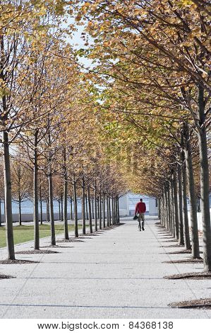 Autumn Foliage, Fall Colors In Four Freedoms Park, New York City