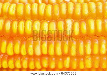 Dried Corn Closeup
