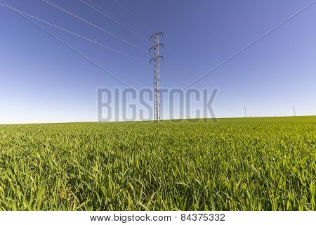 Electric Tower In Green Field
