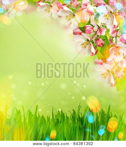 Apple Tree Blossoming And Green Grass With Light Leaks