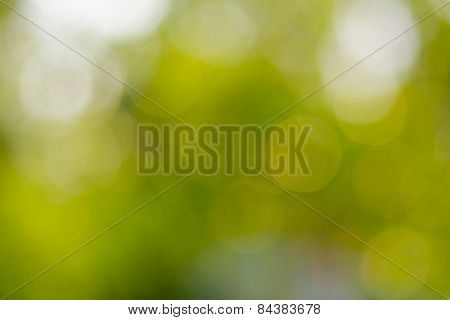 Blurry Green Bokeh
