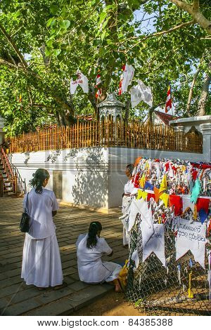 People Worship At  The Famous  Place Where Gautama Buddha Is Said To Have Obtained Enlightenment