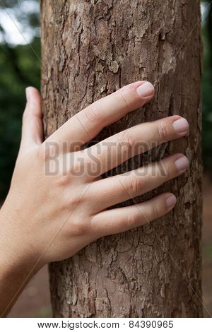 Male Hand Holding Tree Trunk