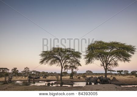 Looking out across at some elephants drinking