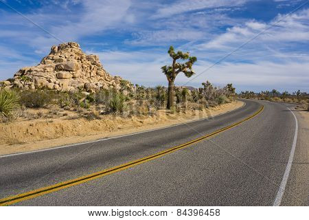 Bend In Joshua Tree Road