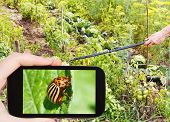 image of potato bug  - garden concept  - JPG