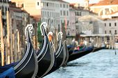 picture of gondola  - Rows of Gondolas in Venice (Gondolas as main subjects)