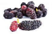 stock photo of mulberry  - Group of mulberries isolated on a white background - JPG
