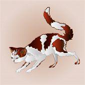stock photo of kitty  - Kitty on the hunt three color feline vector illustration - JPG