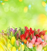 picture of leak  - Tulips over blurred green background - JPG