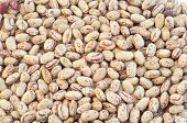 stock photo of pinto  - beautiful macro of colored pinto beans in studio - JPG