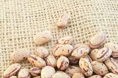 stock photo of pinto bean  - beautiful macro of colored pinto beans in studio - JPG