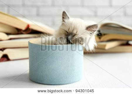 Cute little cat in box near books on light background