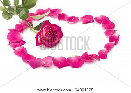 flower of a rose and rose-petals in the form of a circle