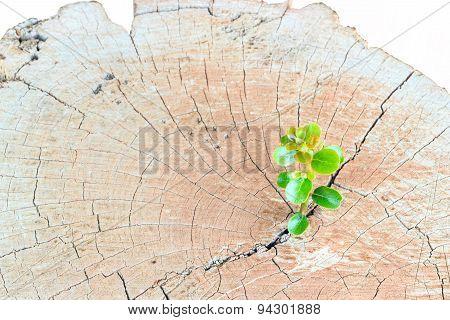 New Life Seedlings On A Tree Stump