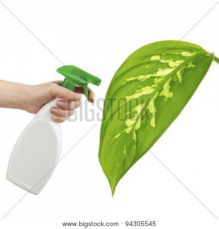Female hand with sprayer and big green leaf isolated on white